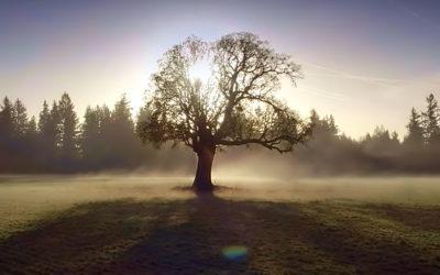 Régénération – Le miracle oublié